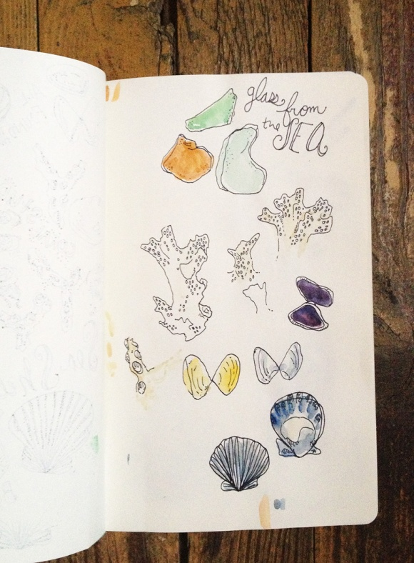 Hello Niccoco Seashell Study2